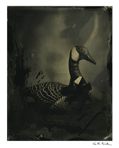 Stuffed Goose | Tintype Reproduction