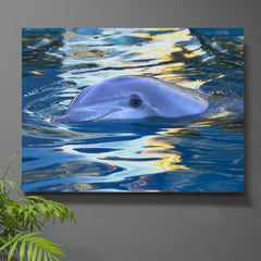 Lazy Swim Dolphin Wall Art - JWB Art Unlimited