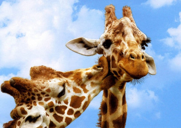 Impress Your Friends on World Giraffe Day With These 10 Fun Facts