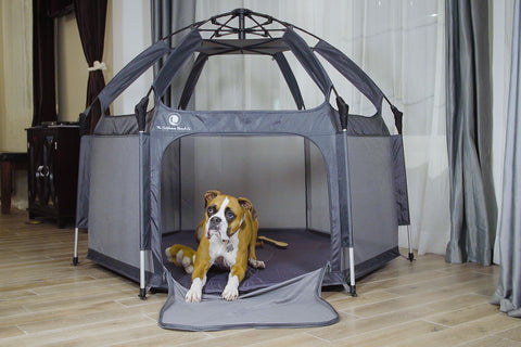 Dog sitting comfortably in the pop n go tent
