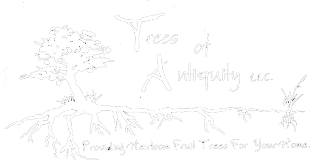Trees of Antiquity