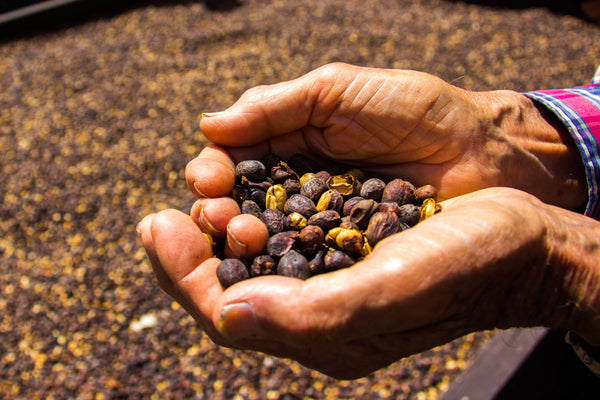 Naturally Dried Cascara