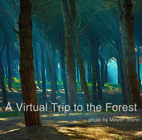Deepak Chopra's Intro: Virtual Trip to the Forest - 21:41 - (MP3)