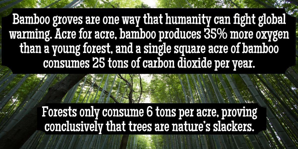 Bamboo is Eco-Friendly