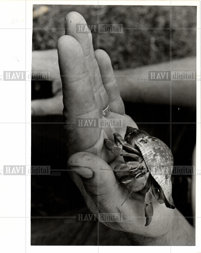 1977 Press Photo Hermit Mexico Philippines shells - Historic Images