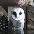 Barn Owl Black and White Charcoal Paint Art Print by Lauren Gray.