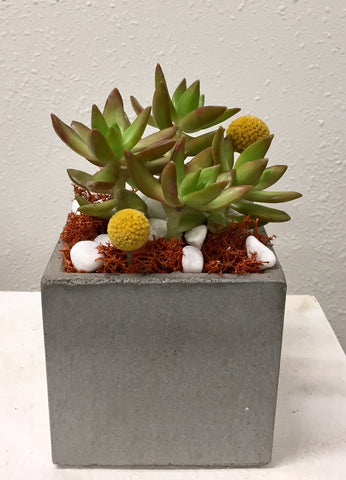 Angle 33 Succulent Cube