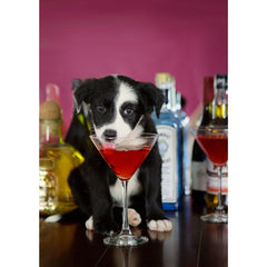 Cheers - Border Collie