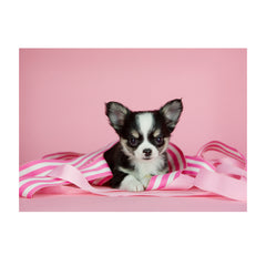 Note Cards- Chihuahua