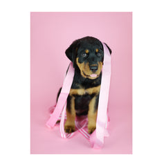 Note Cards- Rottweiler