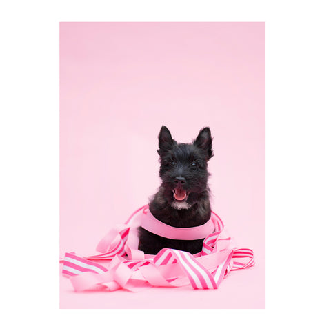 Note Cards- Scottish Terrier
