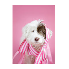 Note Cards- Sheepdog Mix