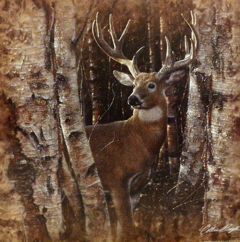Collin Bogle Birchwood Buck