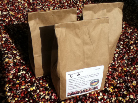 5 lbs Alpine Varietal of Painted Mountain Corn Seed