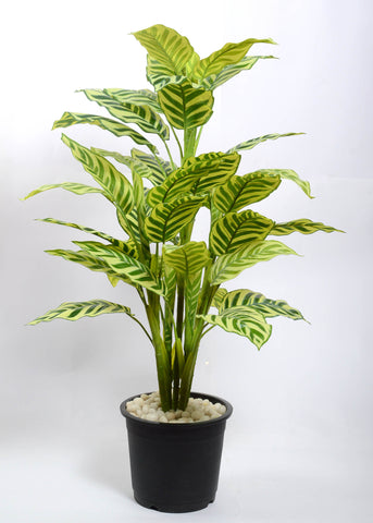 Artificial Calathea plant, 3 ft