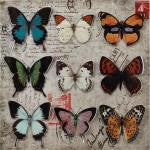 Butterfly Collage 3-D Wall Art Home Decor - AttractionOil.com