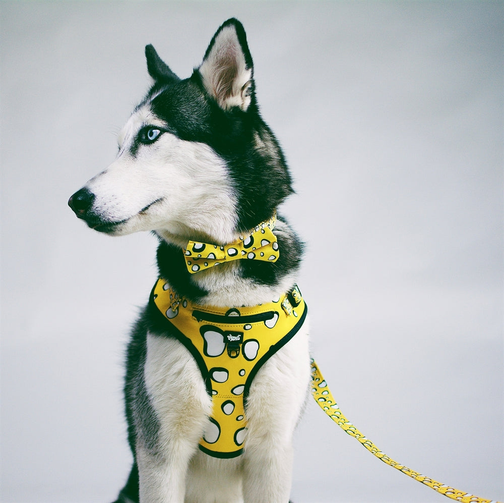 Heady Pet Harnesses