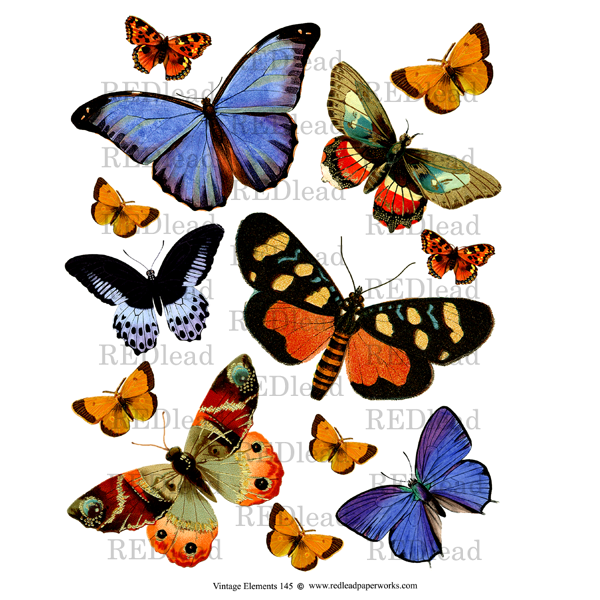 Collage Sheet Vintage Elements 145 Butterflies