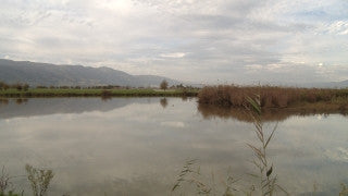 LN_019 Israel Nature and Landscape footage: Jordan River, tilt up to Golan Mountains