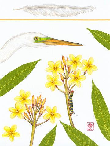 Great White Egret and Frangipani