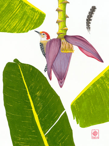 Woodpecker and Banana Blossom