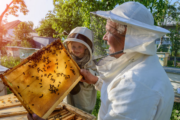 Urban Beekeeping Class: Preparing For Fall