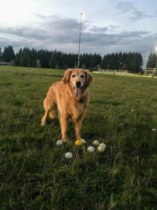 Maggie may have your CrankShooter Lacrosse balls!!