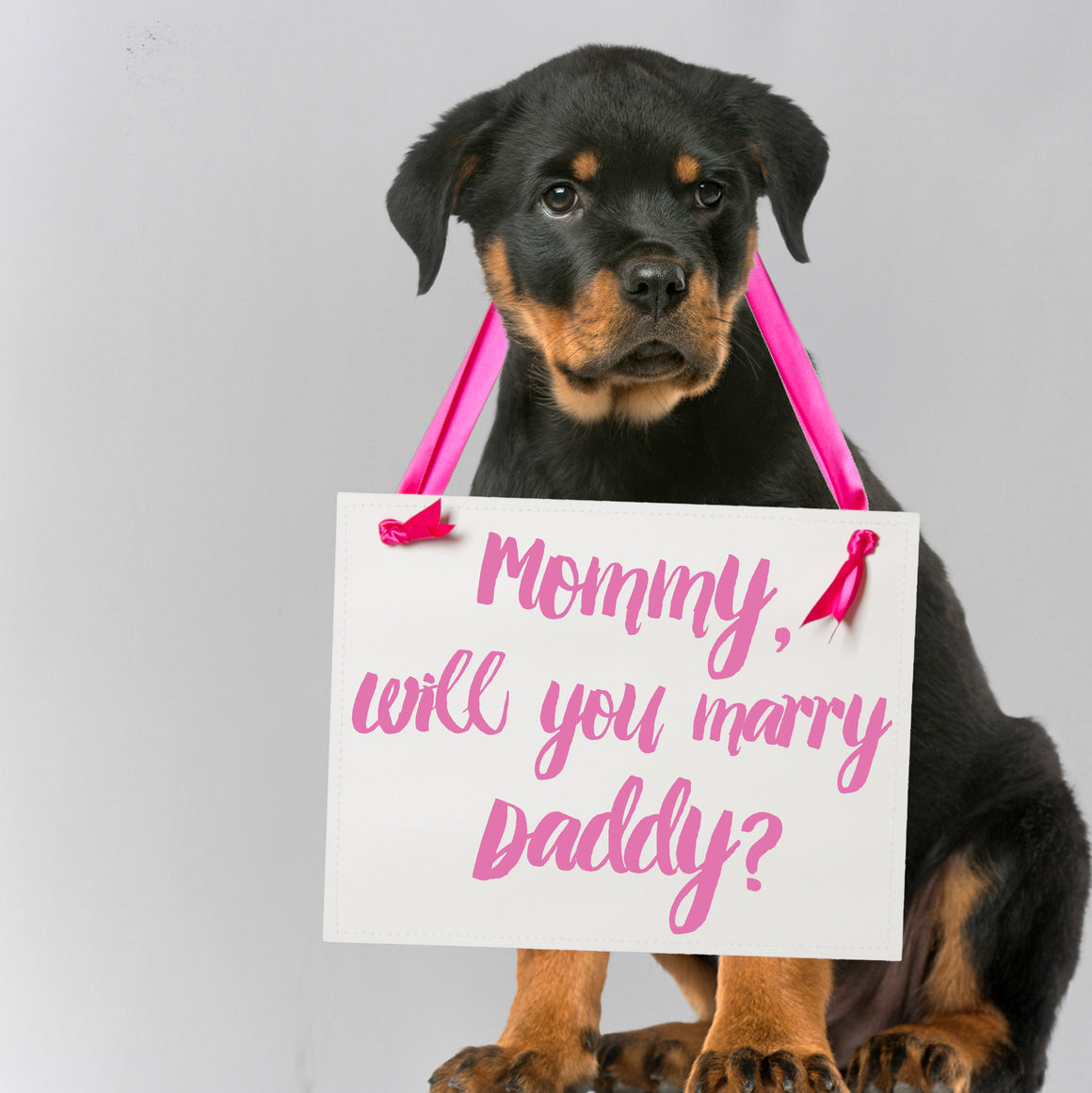 Mommy Will You Marry Daddy Sign