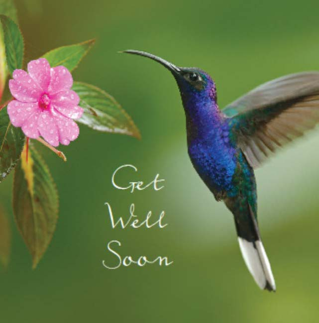 Get Well Card: Hummingbird & flower: S158