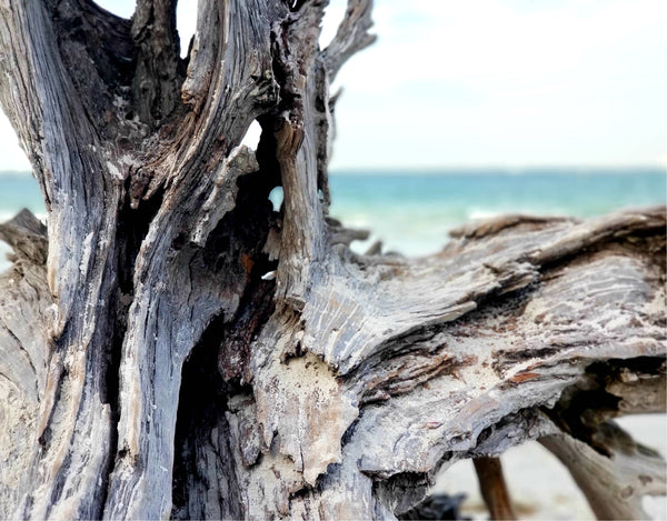 Driftwood in Sanibel 6 Print Mobile Photography