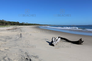Photograph of driftwood on the beach at Shark Bay, Illuka NSW