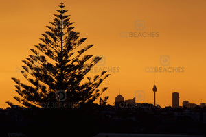 A photograph of trees against the Sydney city skyline at sunset.