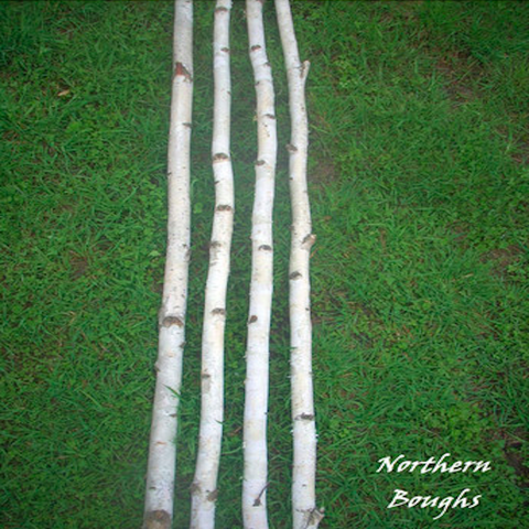 Four Medium White Birch Poles 4 ft - Northern Boughs