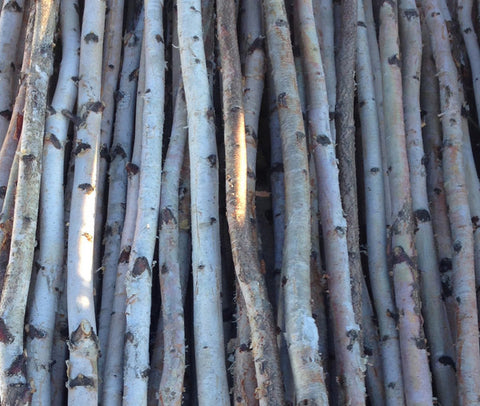 Four Thin White Birch Poles 4 ft - Northern Boughs