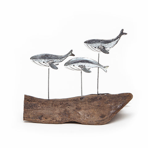 Shoeless Joe Swimming Silver Whales on Driftwood
