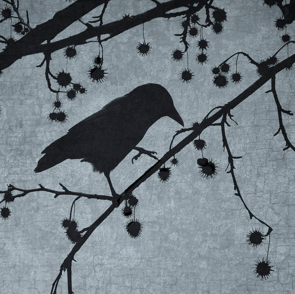 STEP LIGHTLY - Fine Art Print, Blue Crow Series