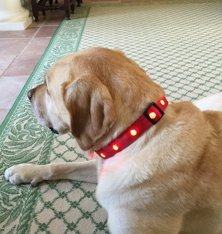 Pet Lights Dog Collar - Dog Collars - BeauJax Boutique