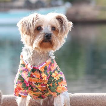 sunset-hibiscus-hawaiian-camp-dog-shirt-BeauJax Boutique