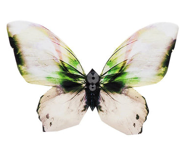Daybreak of Stockholm Butterfly Brooch