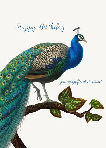 Happy Birthday You Magnificent Creature • 5x7 Greeting Card