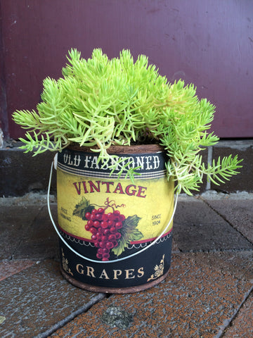 Funky succulents in vintage pots