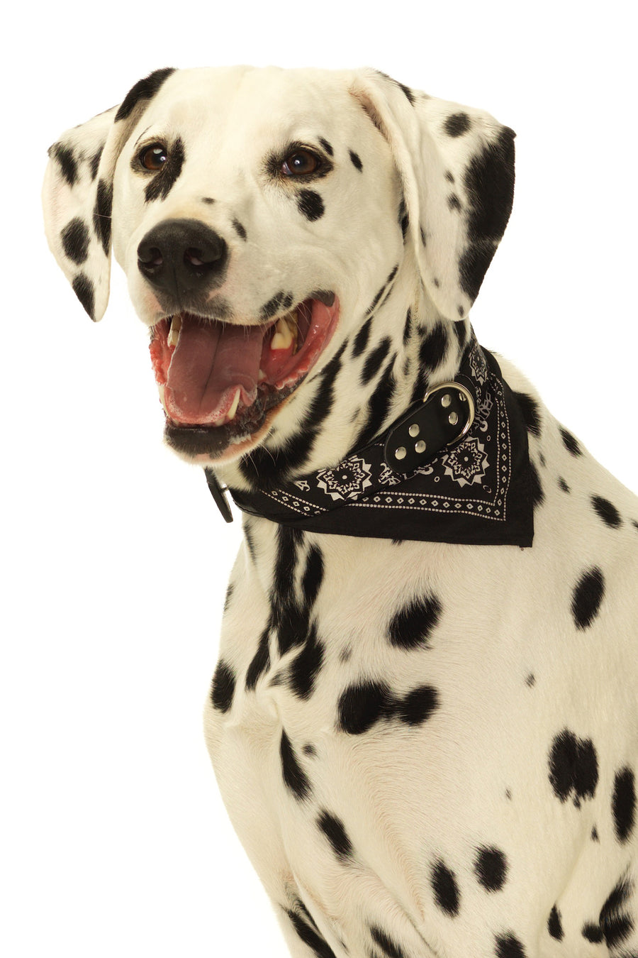 Iconic Bandana Dog Collar in Black & White