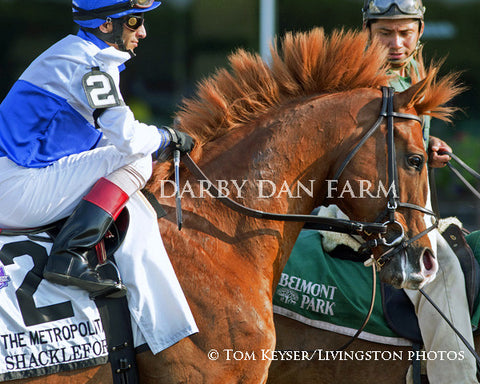 "Foam Mounted Shackleford ""Mohawk"" - 8x10"" Matted Print"