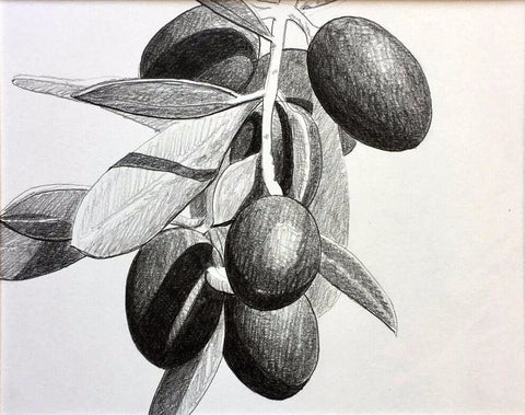 Loose Olive Study