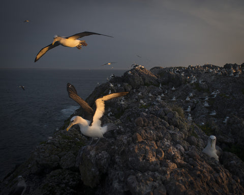 Leaving on the light, On Albatross Island 2014 by Matthew Newton