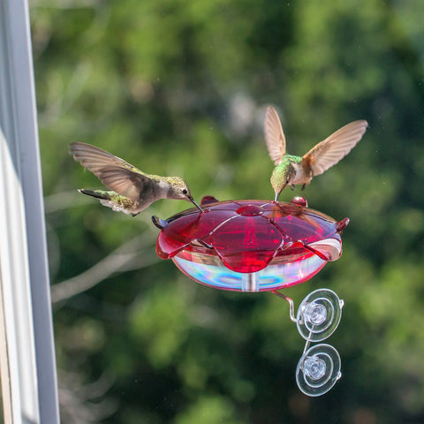 Ruby Sipper Window Hummingbird Feeder Clear
