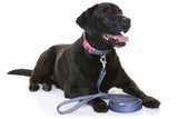 Neoprene Dog Lead - Marley