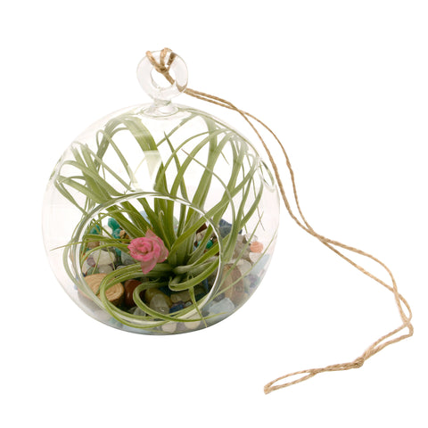 "4"" Rainbow Gemstone Bubble Terrarium with Blooming Air Plant"