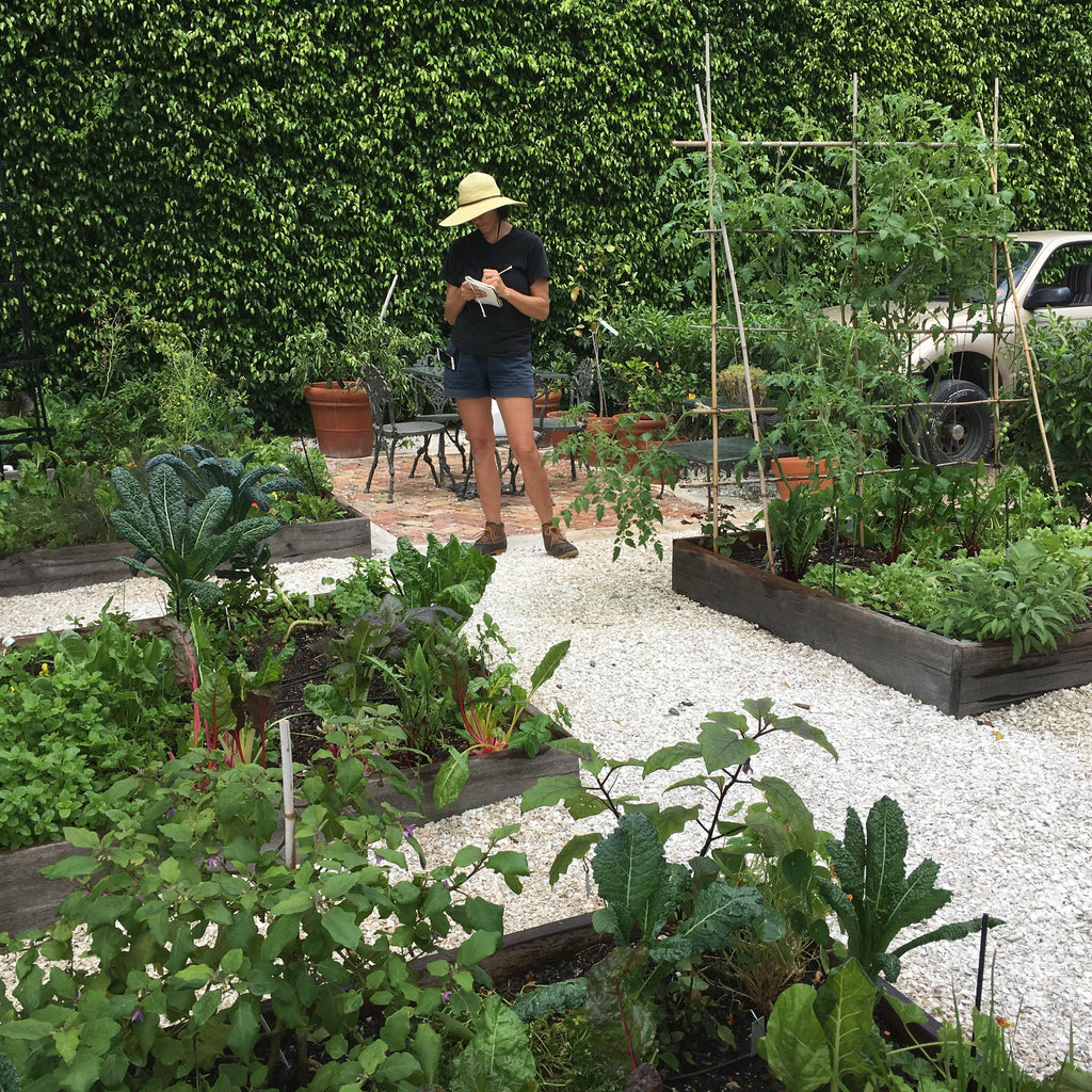 Introduction to vegetable gardening in South Florida Workshop Sunday February 10th
