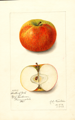 Apples, Duke Of York (1913)